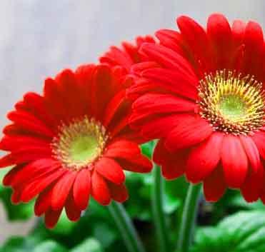 Flower Cool Whatsapp DP