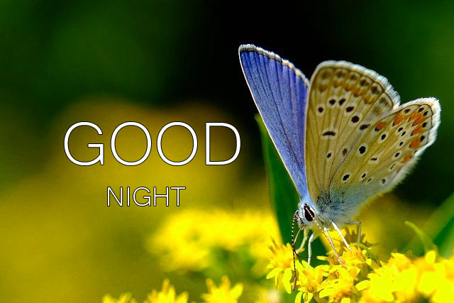 Free Good Night Pics Pictures Download