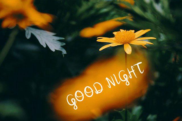 Free Good Night Wallpaper 2021