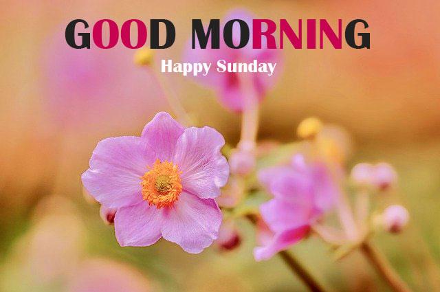 Free Sunday Good Morning Wallpaper 2021