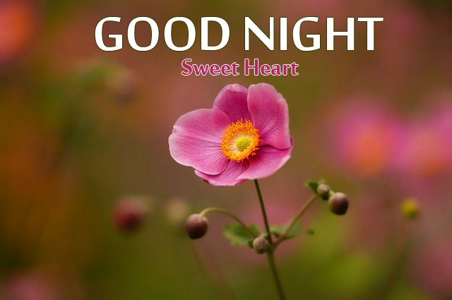 Good Night Images New HD Download