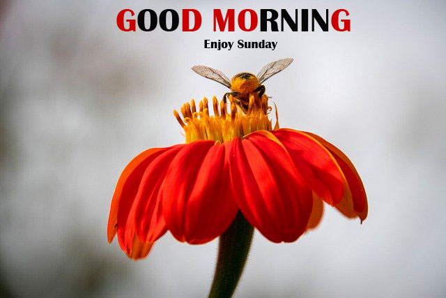 New HD Sunday Good Morning Images