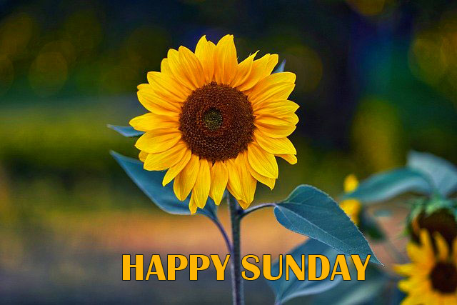 Sunday Good Morning Pics Pictures 2021