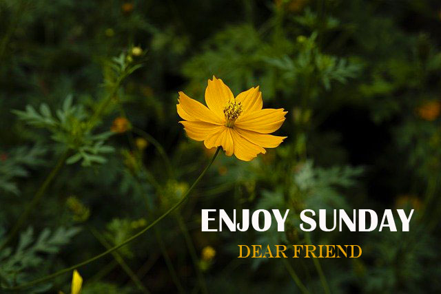 8576+ { Best } Good Morning Happy Sunday HD Images Download