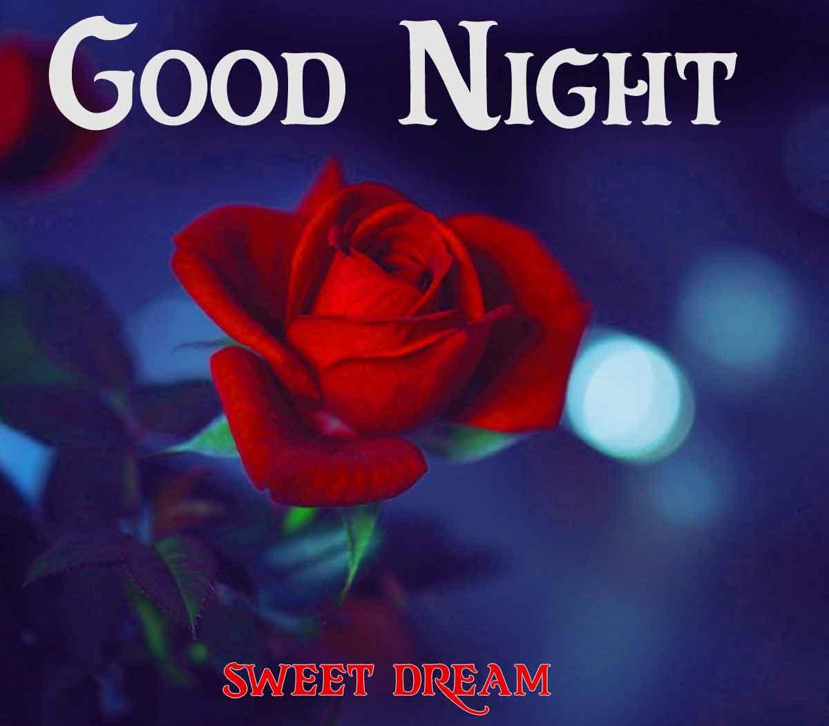 rose Good Night wallpaper