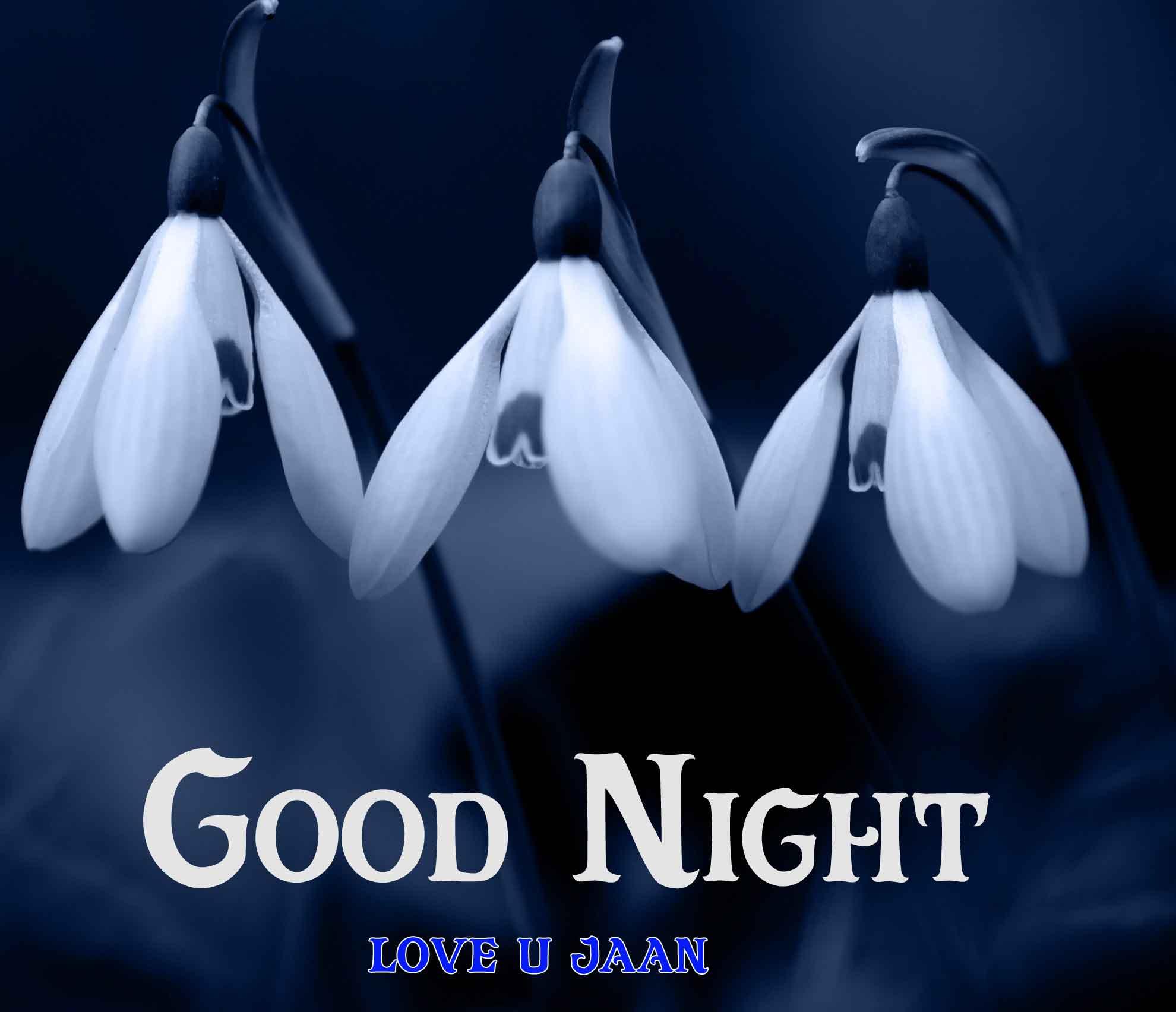white flower Good Night hd