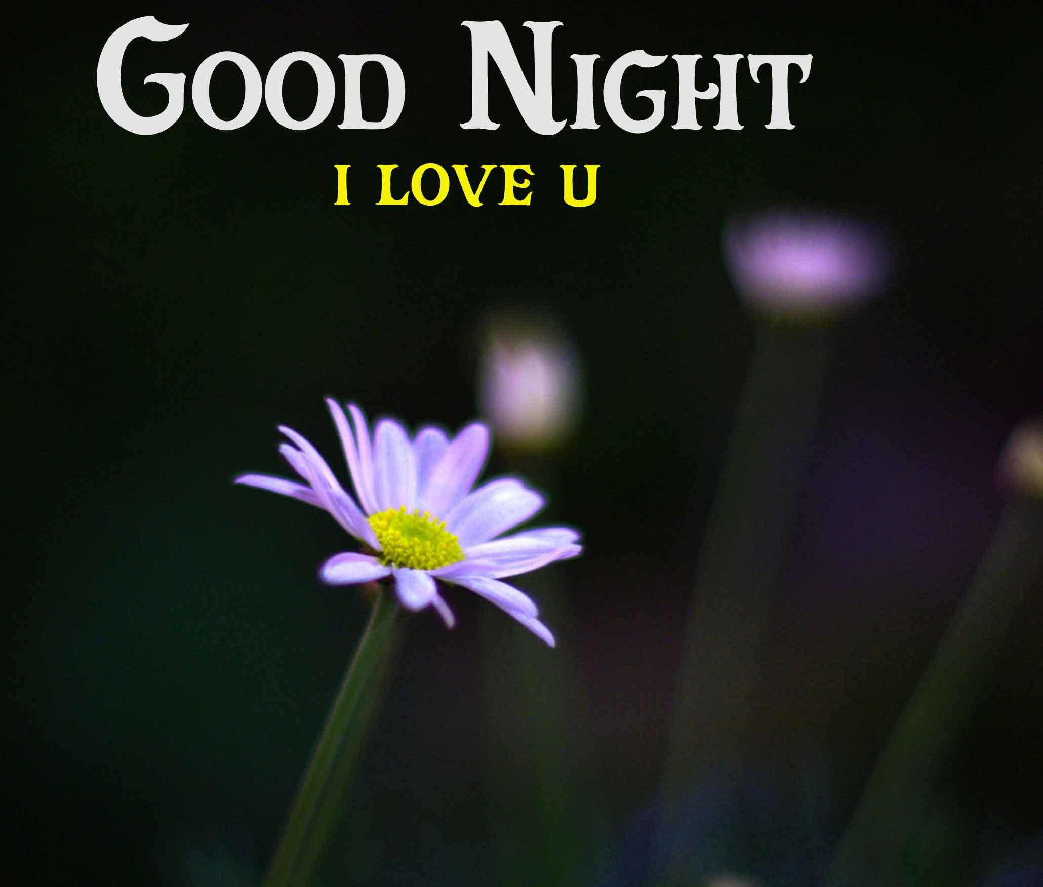 white flower Good Night pics
