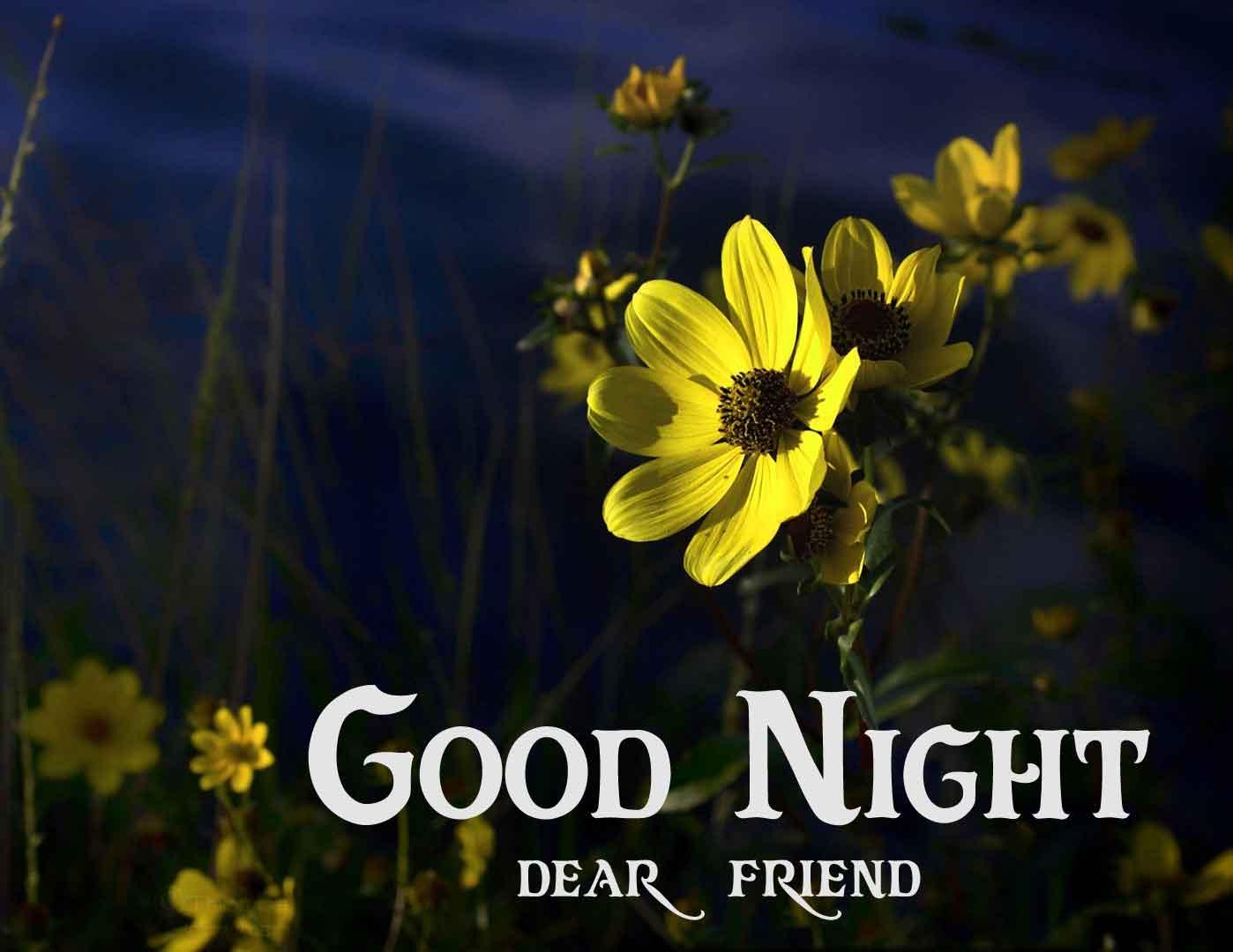 yellow flower Good Night hd