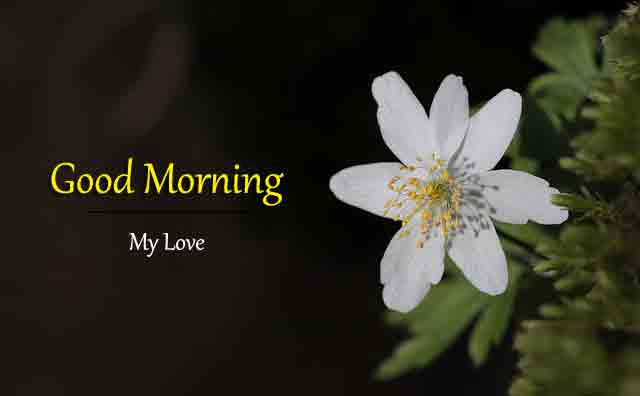 Best Quality Good Morning Images Download 1