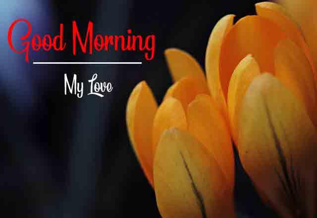Flower Good Morning Wallpaper Wishes