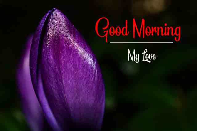 Free Good Morning Images for Lover