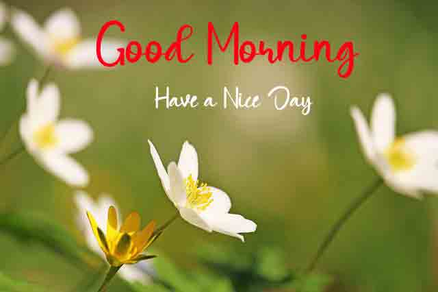 Good Morning Pictures 2021