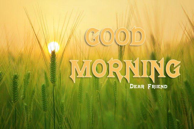 Nature HD 1080P Good Morning Wallpaper Download