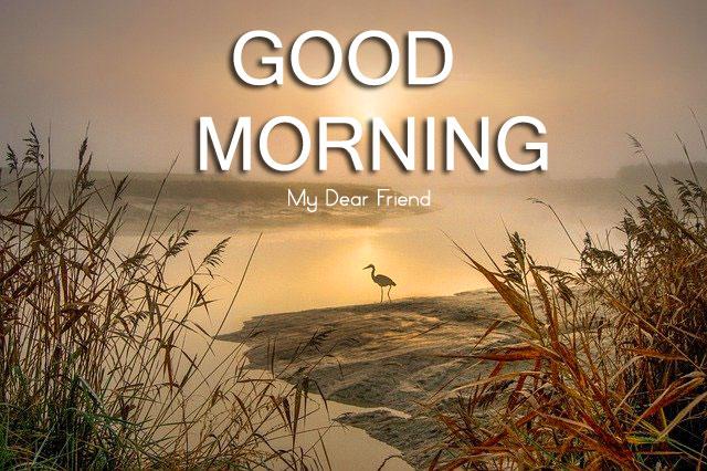Nature HD Good Morning Wallpaper