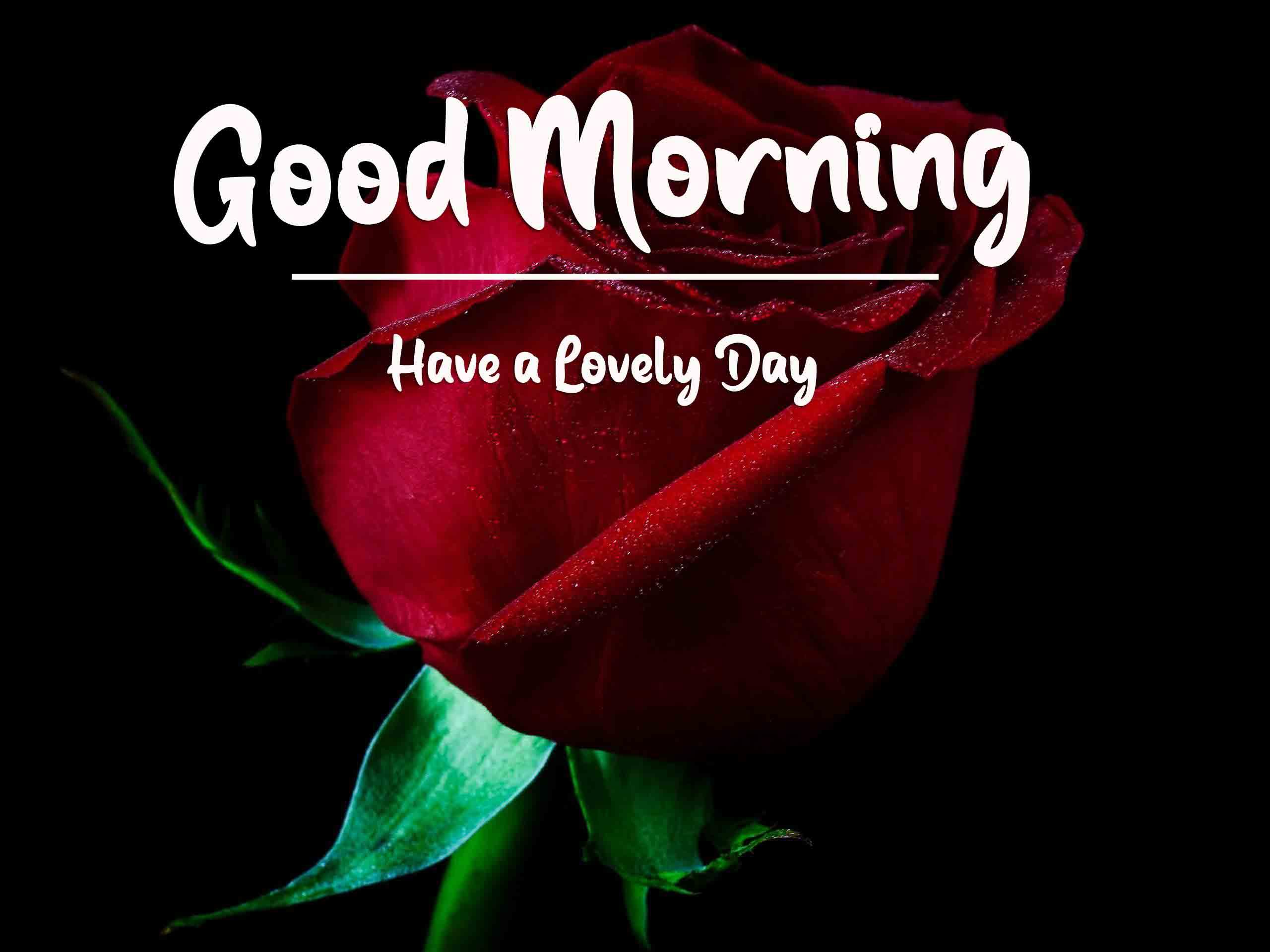 Red Rose Good Morning Images Free
