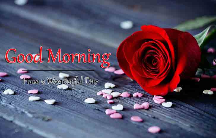 Red Rose Good Morning Wishes Images