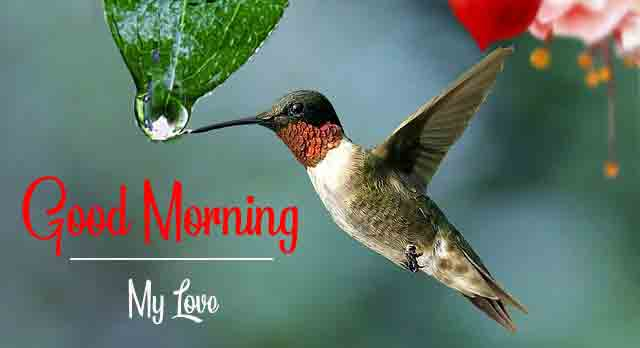 Top HD Good Morning Images 2021