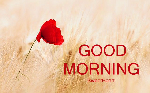 Top Quality HD Free Good Morning Wishes