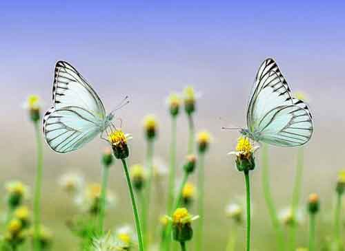 best butterfly Whatsapp Dp Images