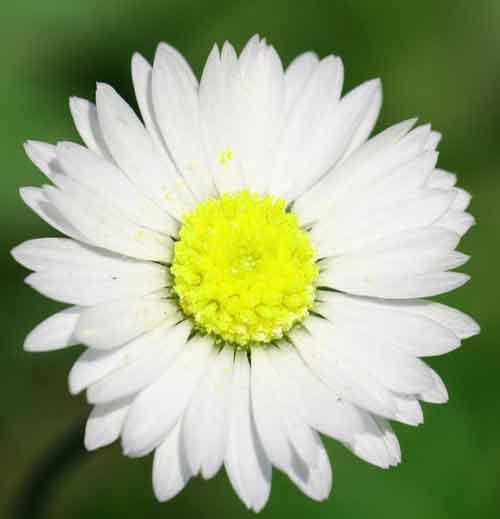 best flower Whatsapp Dp Images