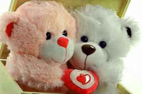 best teddy Whatsapp Dp Images free