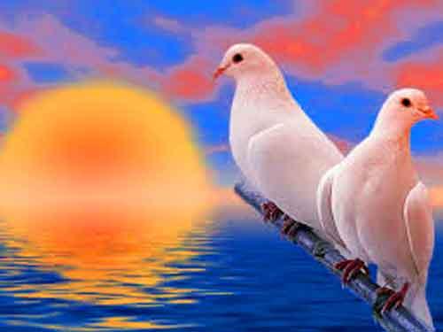 bird Whatsapp Dp Images photo hd