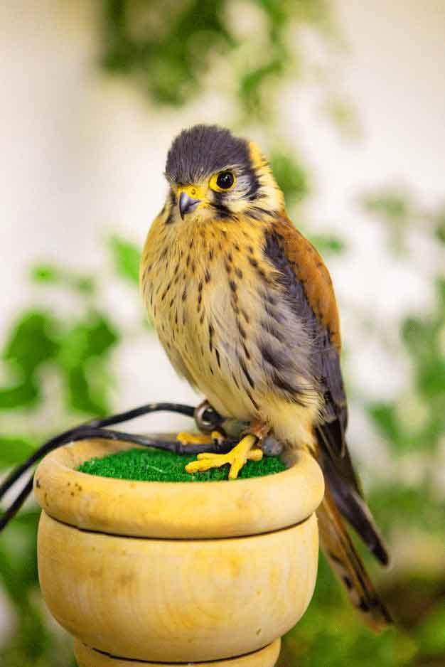 bird Whatsapp Dp Profile Images