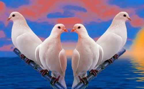 birds Whatsapp Dp Images