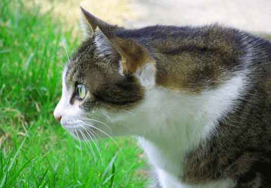 cat Whatsapp Dp Profile Images