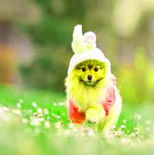 cute free Whatsapp Dp Images