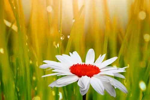flower Whatsapp Dp Images 1