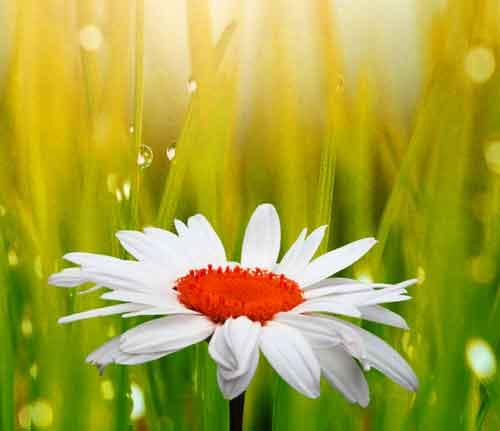 flower Whatsapp Dp Images 3