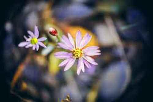 flower Whatsapp Dp Images pics free hd