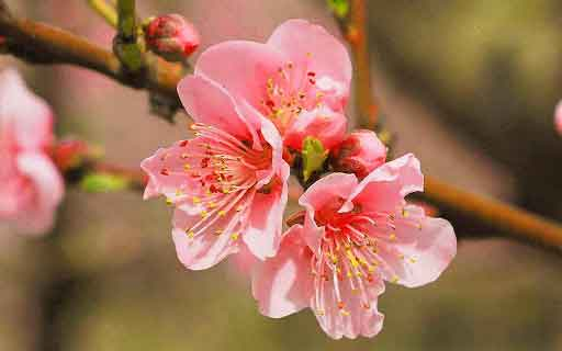 flower Whatsapp Dp Profile Images pics photo free hd