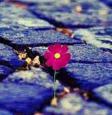 flower best Whatsapp Dp Profile Images