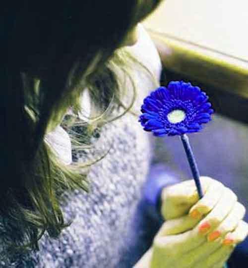 free flower Whatsapp Dp Images photo hd