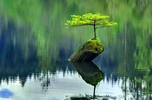 latest nature Whatsapp Dp Images