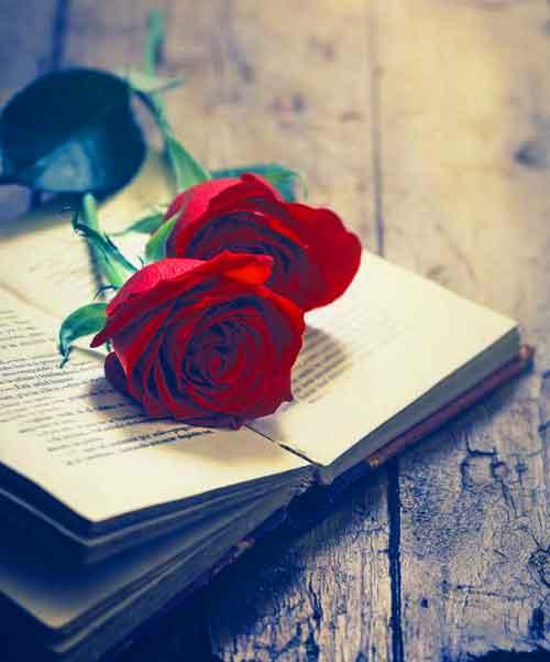 love rose Whatsapp Dp Images