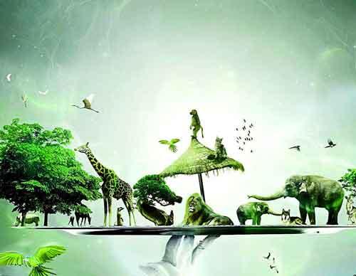 nature Whatsapp Dp Images 2