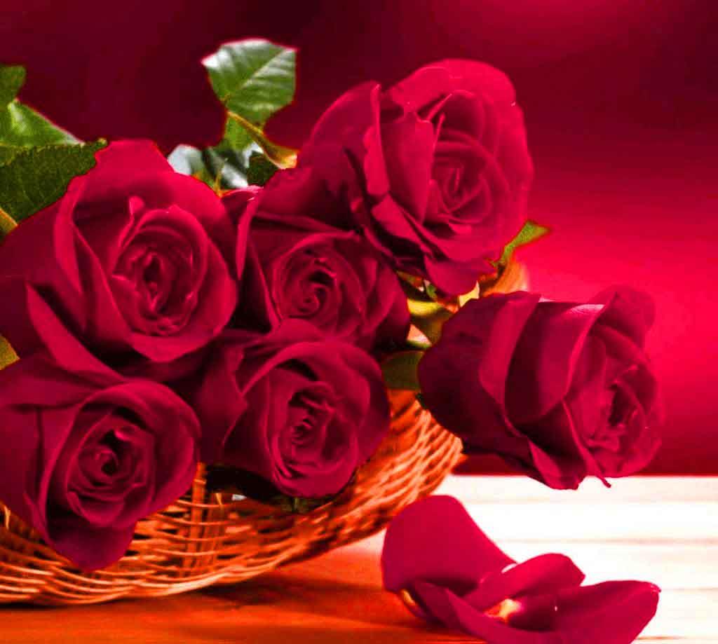 nice flower Whatsapp Dp Profile Imageshd