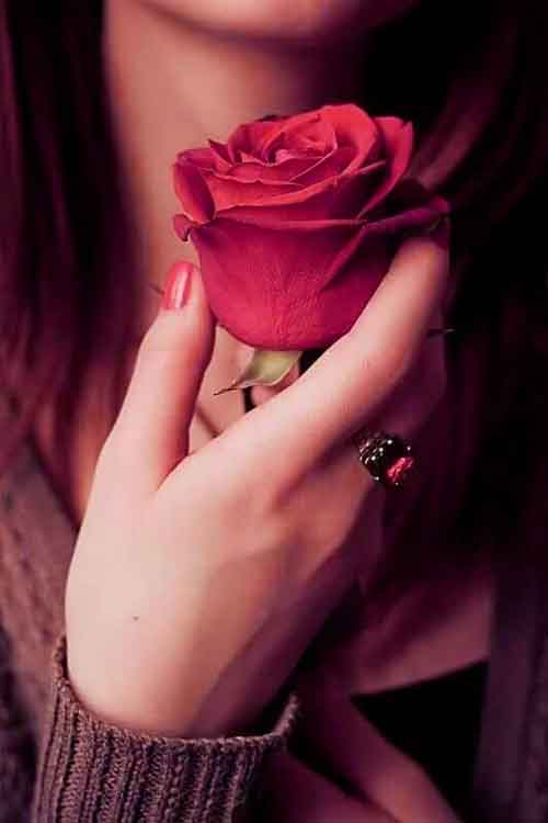 red rose Whatsapp Dp Images