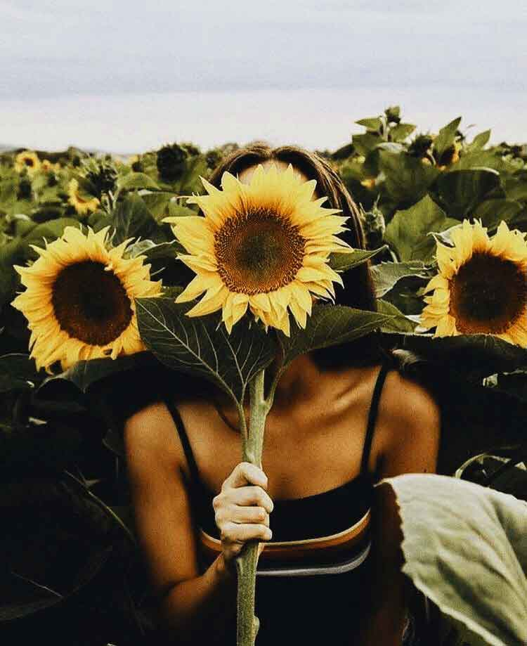 sun flower Whatsapp Dp Profile Images