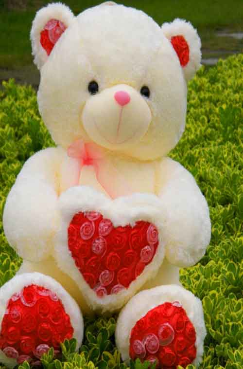 teddy Whatsapp Dp Images photo download