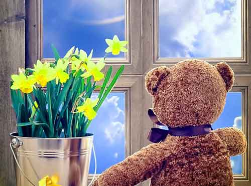 teddy bear Whatsapp Dp Images