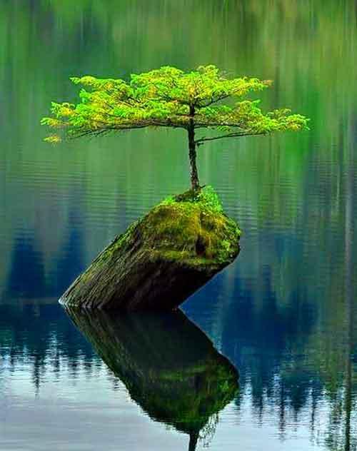 tree Whatsapp Dp Images