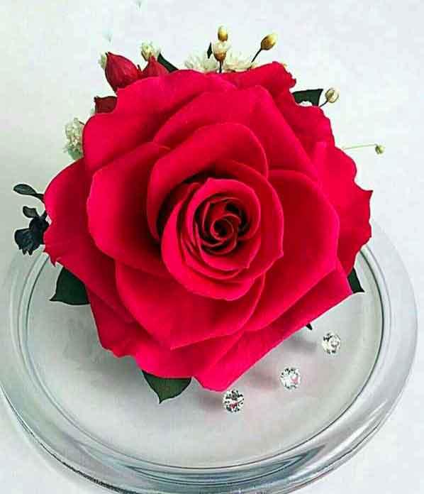 4k Whatsapp dp red flower images hd
