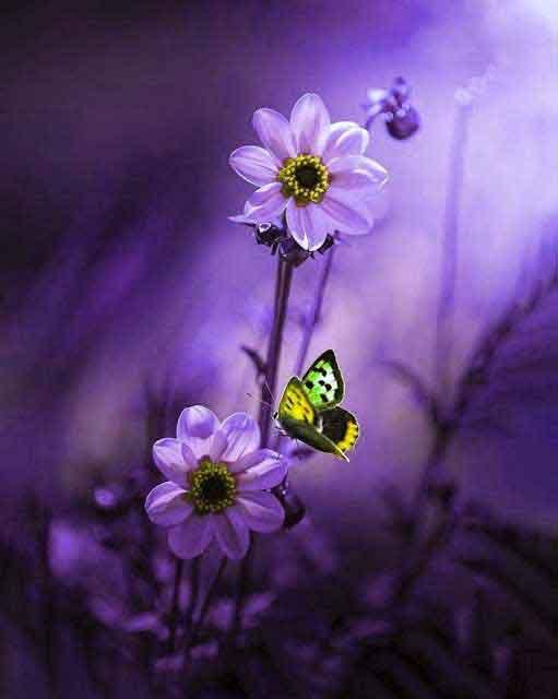 alone flower Whatsapp dp photo