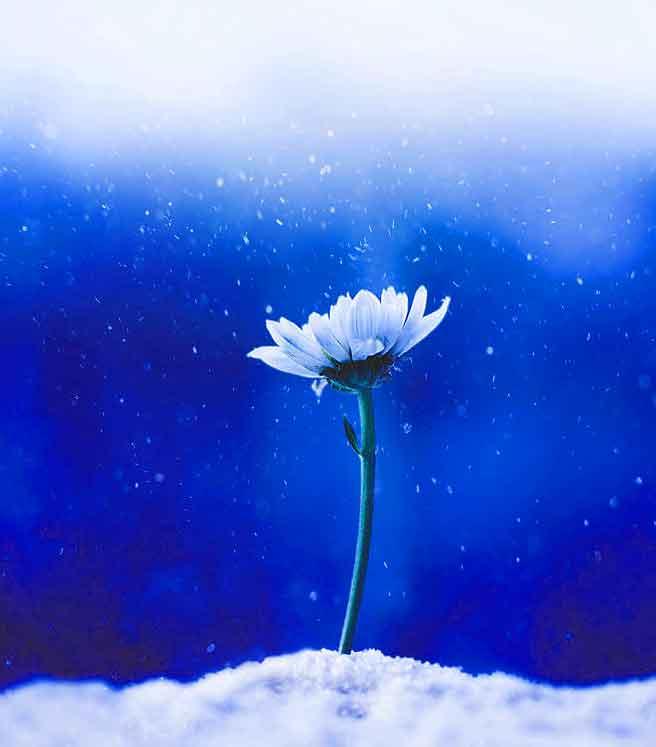 alone white flower 1080p Whatsapp dp pics hd
