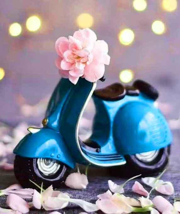 cute flower 4k Whatsapp dp photo free download