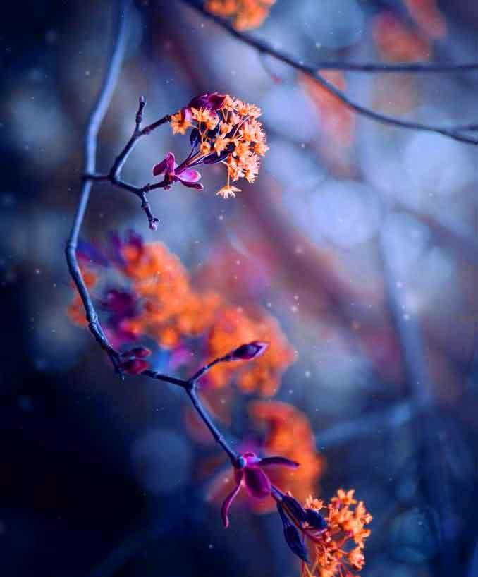 red flower Whatsapp dp photo